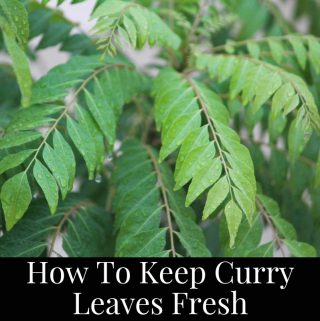 how to keep curry leaves fresh