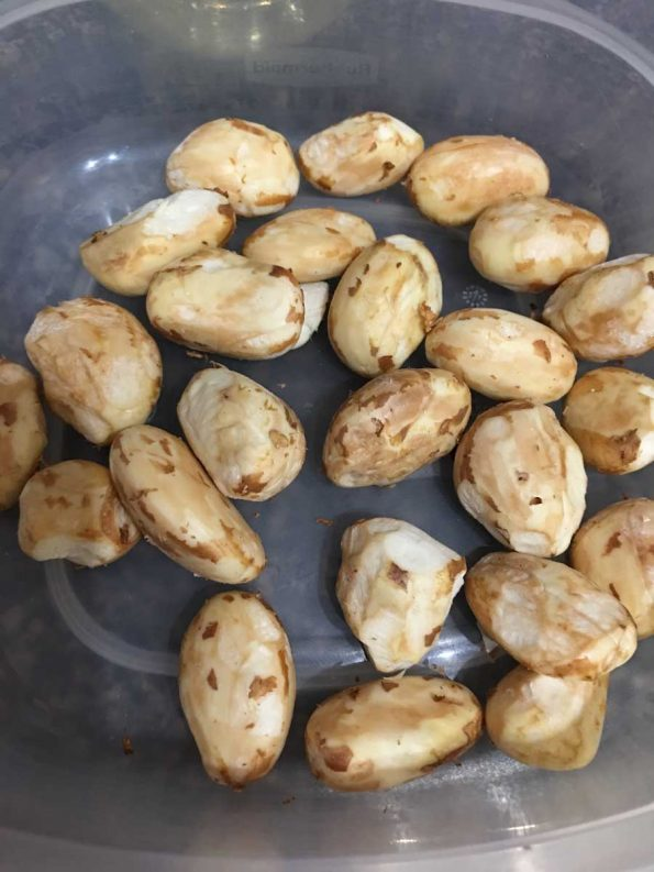 jackfruit seeds photo