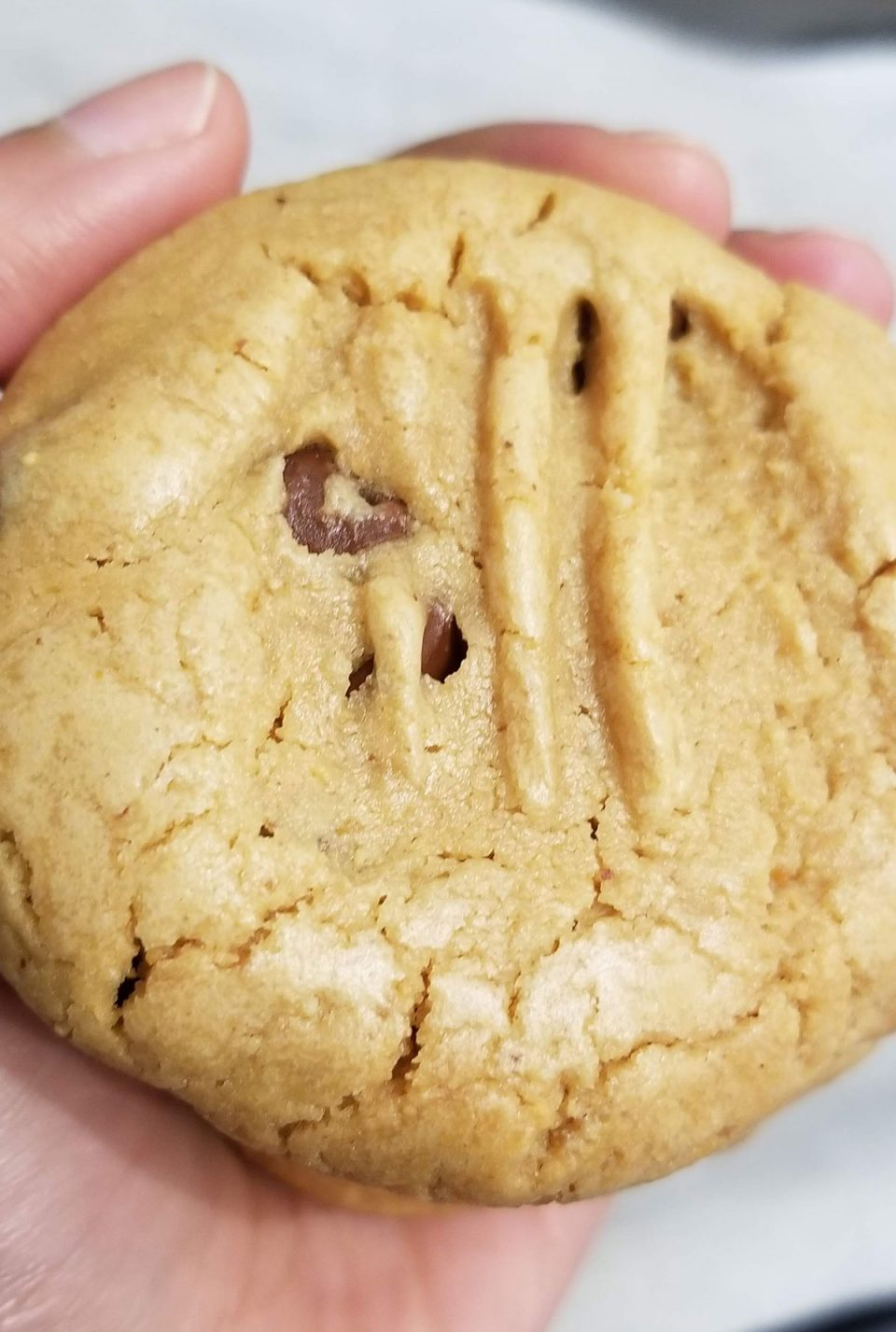 self rising flour peanut butter cookies with chocolate chips